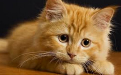Статус про кота вк